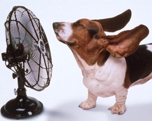 Da oggi è previsto un aumento vertiginoso del caldo e dell'afa nella nostra penisola.