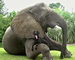 cane elefante cover2