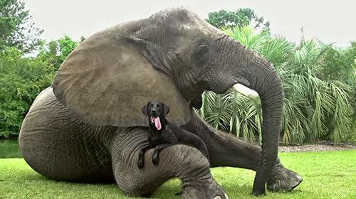 cane elefante