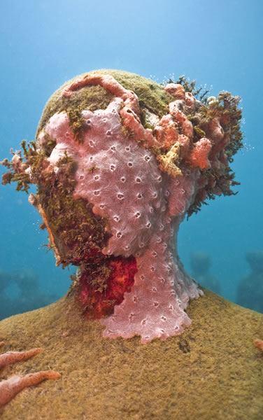 crustose-coralline-alga-3