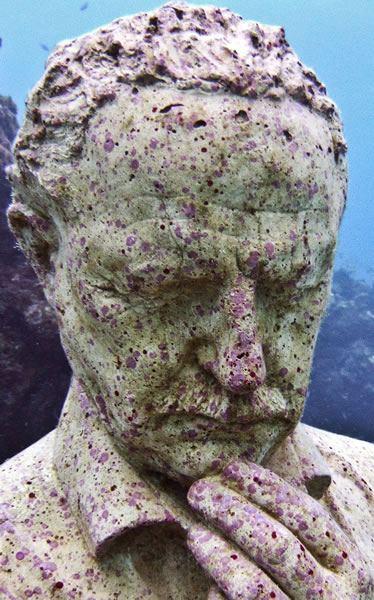 crustose-coralline-alga-6