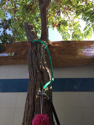 doccia albero per risparmio idrico