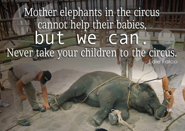edie-falco-mother-elephants-in-the-circus