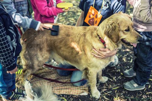 La pet therapy è usata anche in situazioni non problematiche.  Foto: lalunadielsa.org