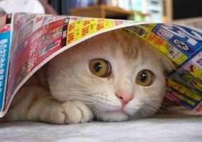Gatto spaventato, foto: giardinauta