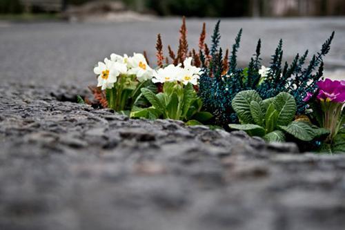 Guerriilla gardening per la Giornata Internazionale della Pace