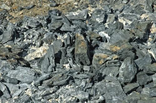 Arricchire i terreni con il carbone
