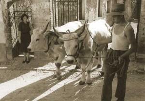 http://perso.ovh.net/~carobola/Origines/carobolante_mondo_contadino.htm
