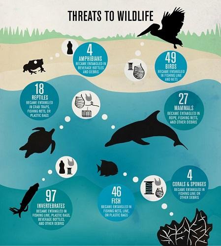 I pericoli per la fauna marina connessi al marine litter