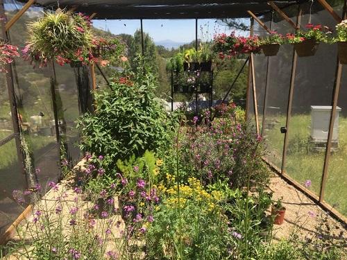La casa delle farfalle costruita da Tim Wong nel suo giardino a San Francisco, California.