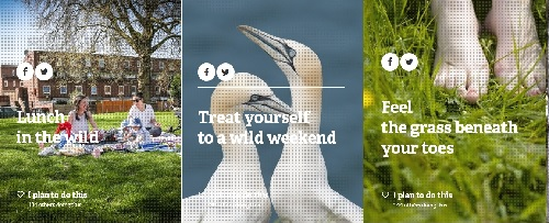 30 Days Wild - idee wild