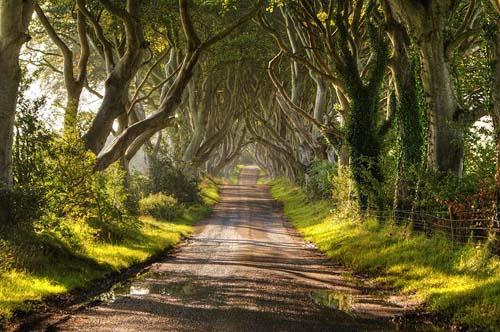 Ecoturismo: Dark Hedged, Irlanda del Nord