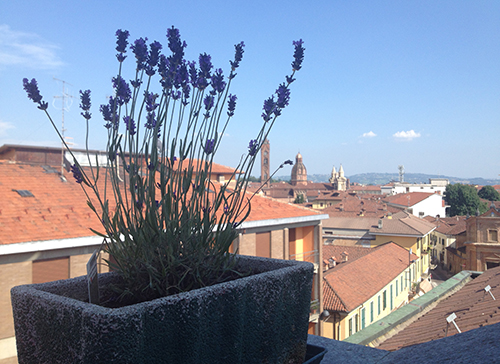 lavanda balcone