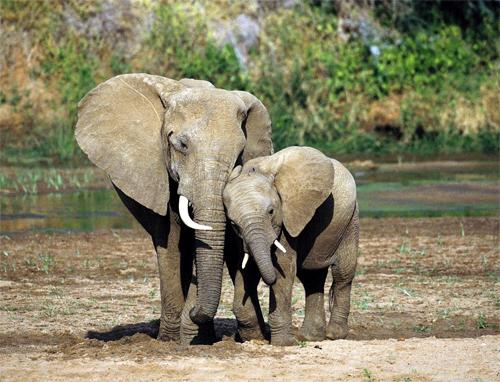 mamma e cucciolo elefante