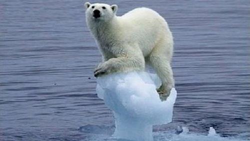 orso-ghiaccio