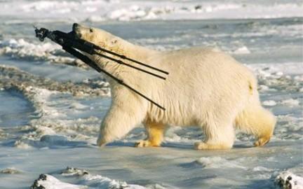 orso polare treppiedi