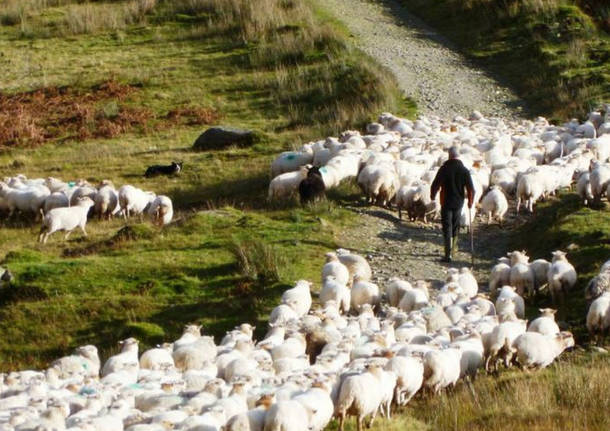 pecore-e-pastori-517652.610x431
