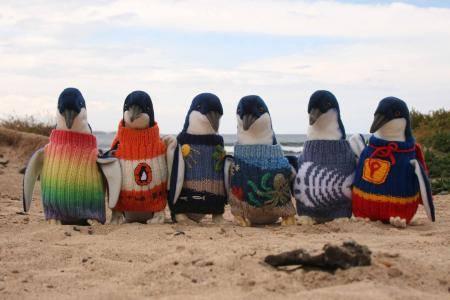 pinguini col maglioncino