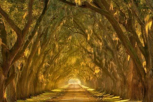 Vicolo delle querce, New Orleans, Lousiana