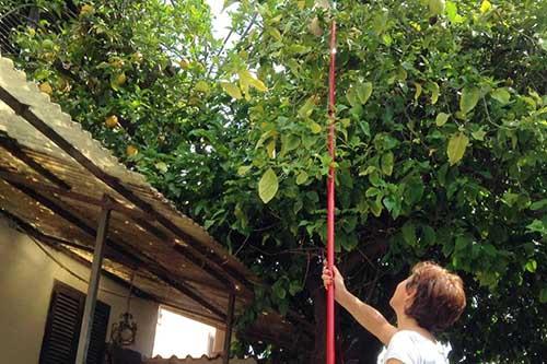 raccolta frutta urbana