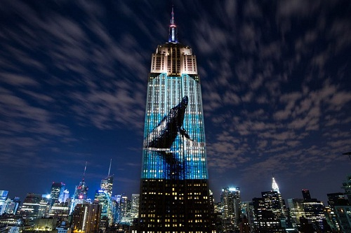 "Un'immagine di ""Racing Extinction"", documentario di Louie Psihoyos"