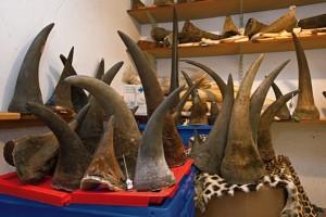 rinoceronteri2