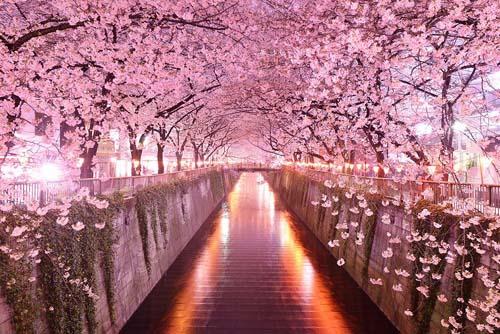 Sakura tunnel, Giappone