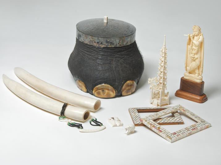 souvenir illegali