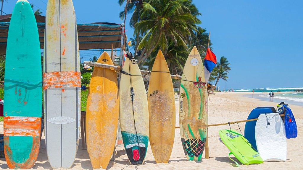 Tavole da surf