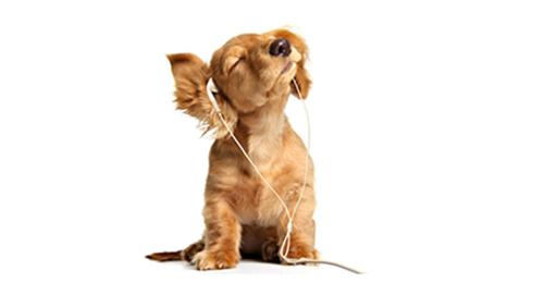 technologic dog