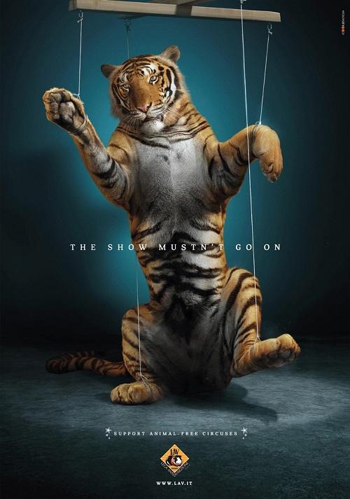 Tiger circus