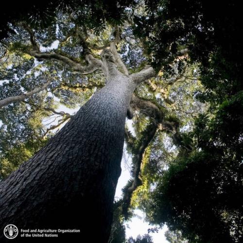 Rapporto FAO sulla deforestazione