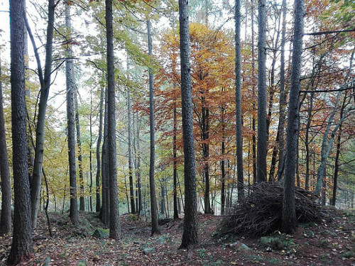 Il bosco degli Urturè