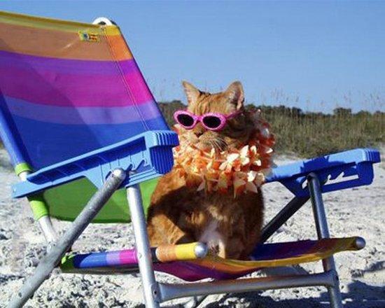 vacanza-gatto