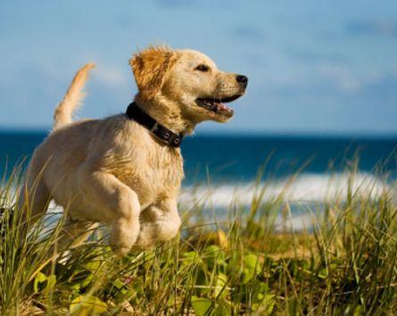 viaggiare con gli animali: vacanze con il cane