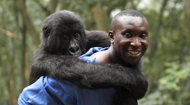 Una scena del documentario Virunga vincitore del Festival di CinemAmbiente 2014 ed entrato nella shortlist per l'assegnazione degli Oscar