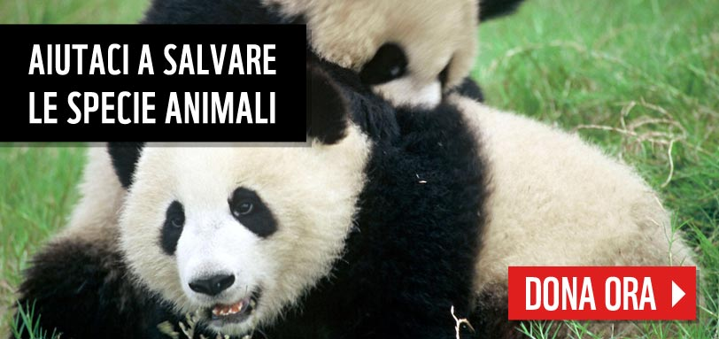 La campagna del WWF per difendere le specie animali (www.wwf.it/specie/)
